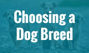 choosing a dog breed