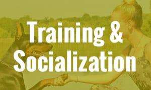training & socialization