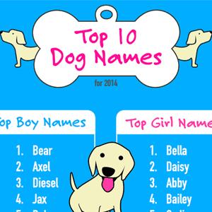 Top Dog Names Fbthum