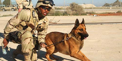 Military Dog Names 50 Awesome Name Options