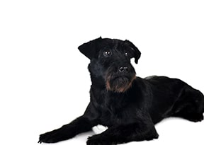 black-dog-names-4