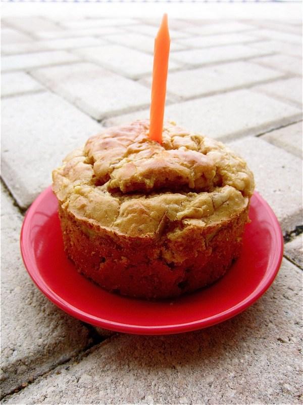 10 Best Dog Birthday Cake Recipes Dog Mom Central