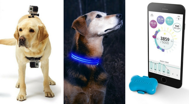 top high tech pet gadgets all dog moms should have dog