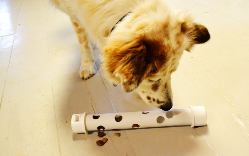 10 Genius DIY Dog Toys That Are Crazy Easy