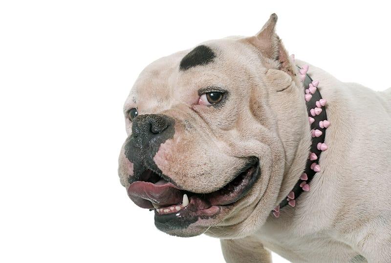 Badass Dog Names – 171+ Tough and Tenacious Ideas - My Dog's