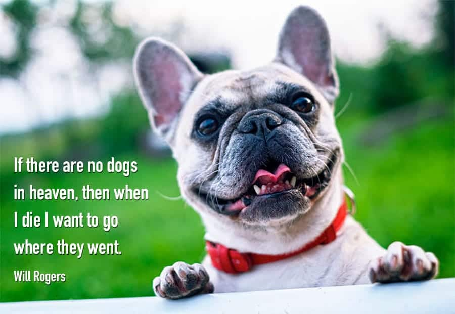 70+ Funny Dog Quotes and Sayings - My Dog's Name