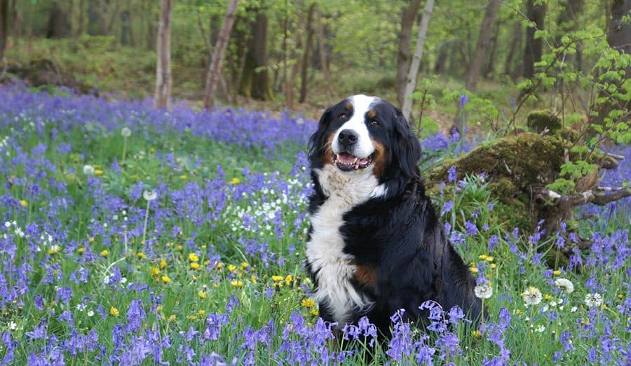 Flower Names for Dogs - My Dog's Name